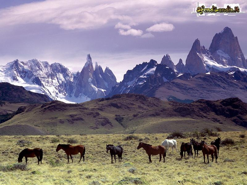 Ande della Patagonia
