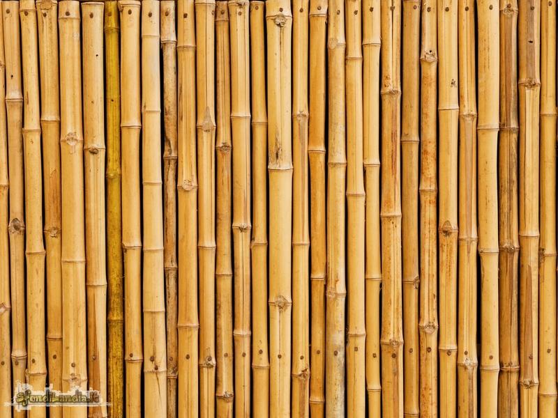 Bamboo secco