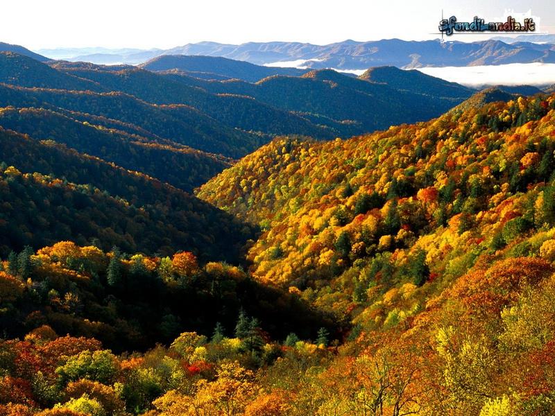 Creek Valley