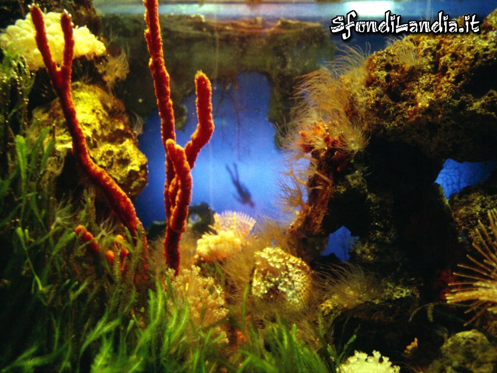 Sfondo gratis di acquario marino per for Sfondilandia mare