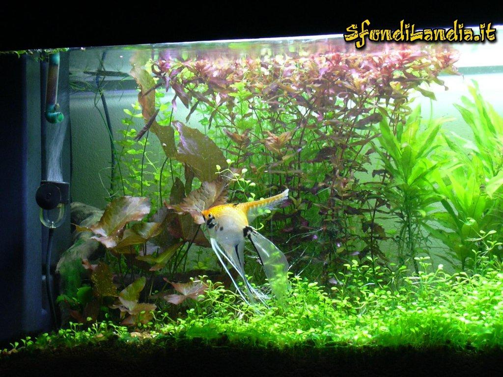 Sfondo gratis di acquario pesci per for Acquario per pesci