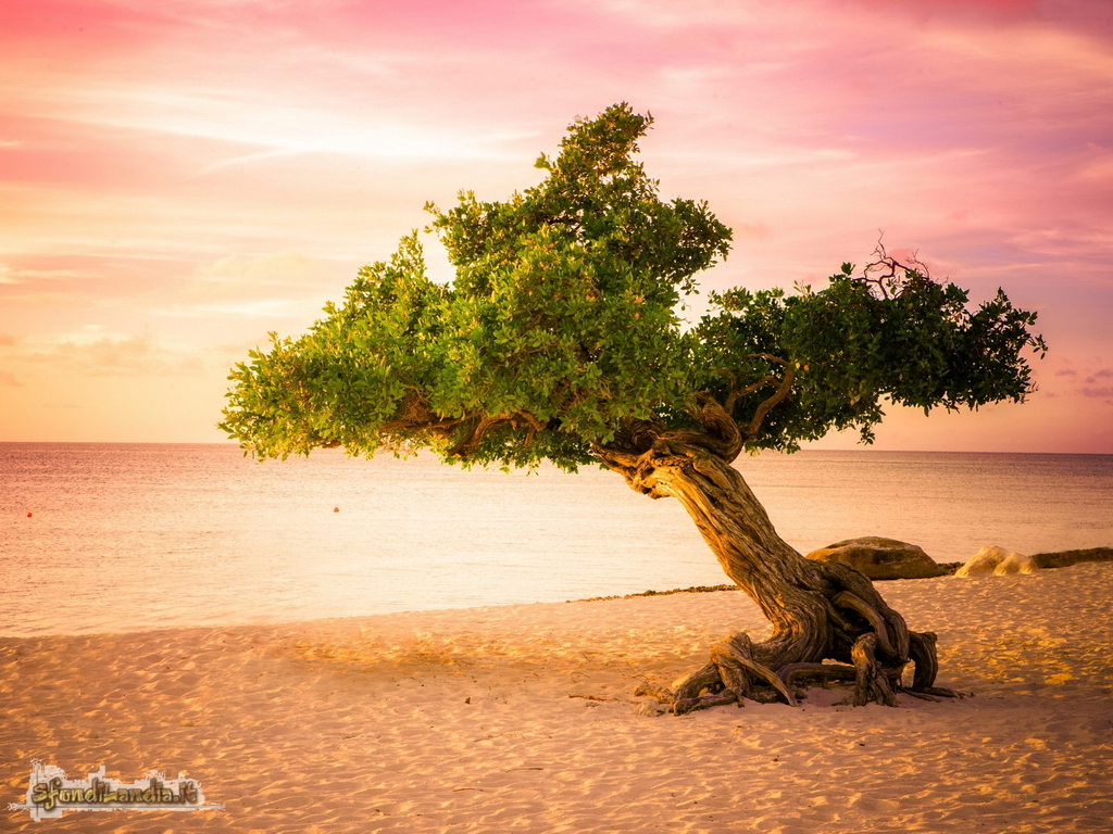 Sfondo gratis di aruba per desktop for Sfondilandia mare