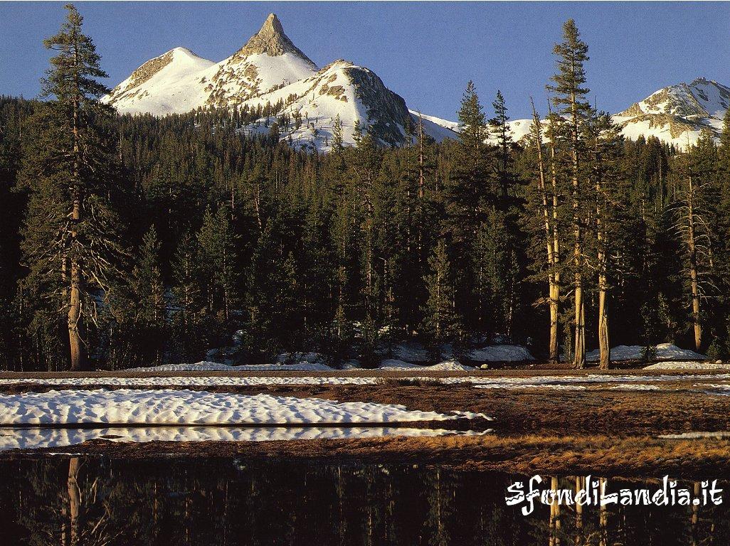Bosco con lago