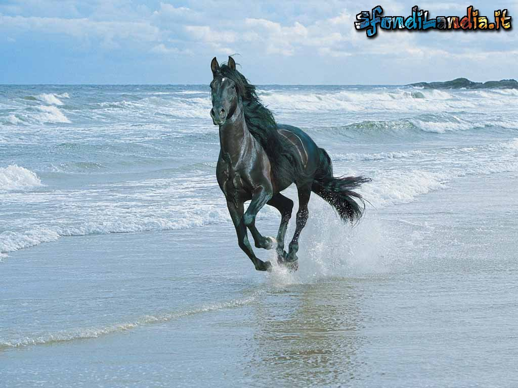 Sfondo gratis di cavallo al mare per desktop smartphone for Desktop gratis mare