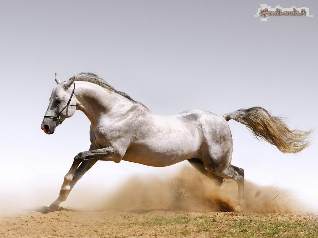 Sfondilandiait Sfondo Gratis Di Cavallo Bianco Per Desktop