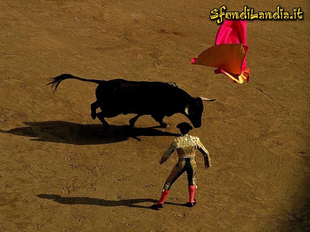 Il Toro e il torero