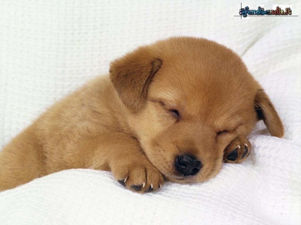 Cucciolo dorme