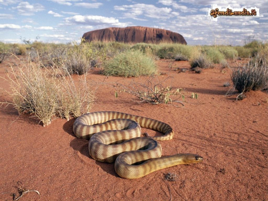 Desert Snake