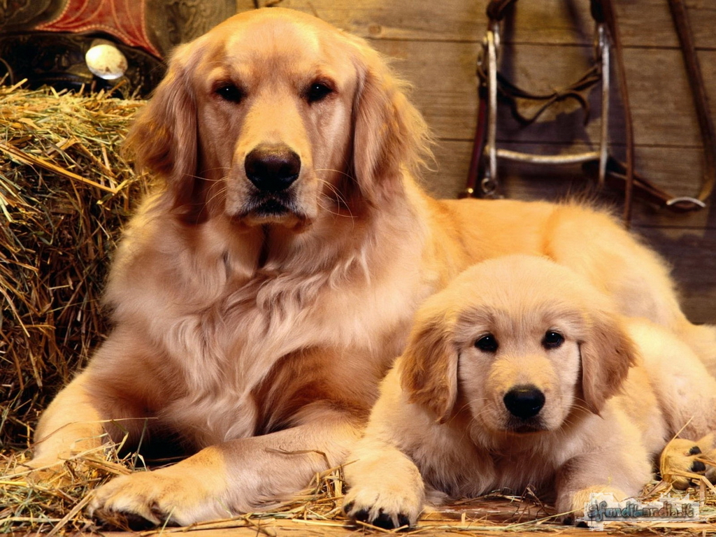 Dogs And Son