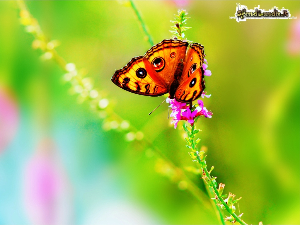 Sfondo gratis di farfalla colorata per for Immagini farfalle per desktop