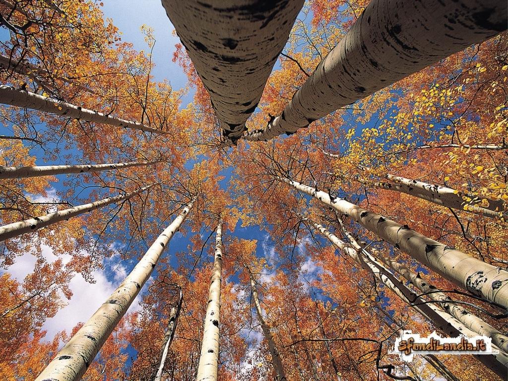 sfondo gratis di alberi dal basso per
