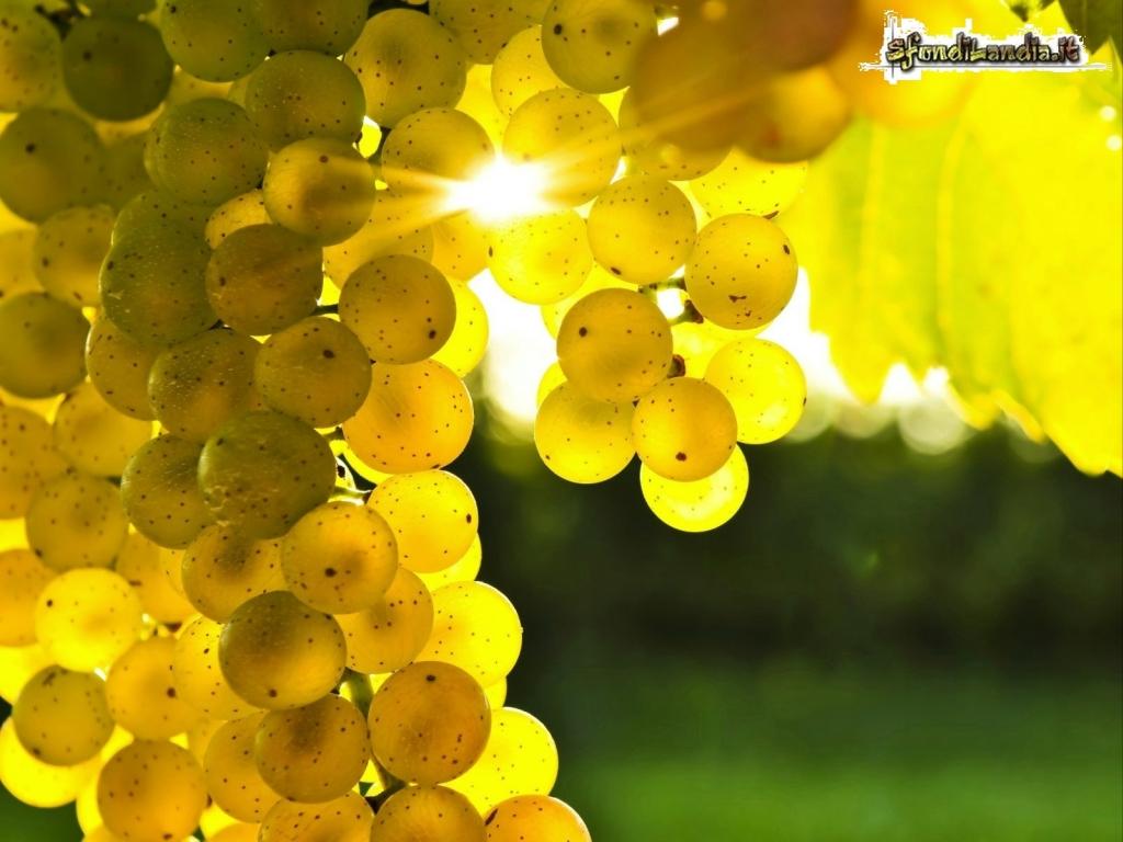 Sfondilandia sfondo gratis di grappolo uva per