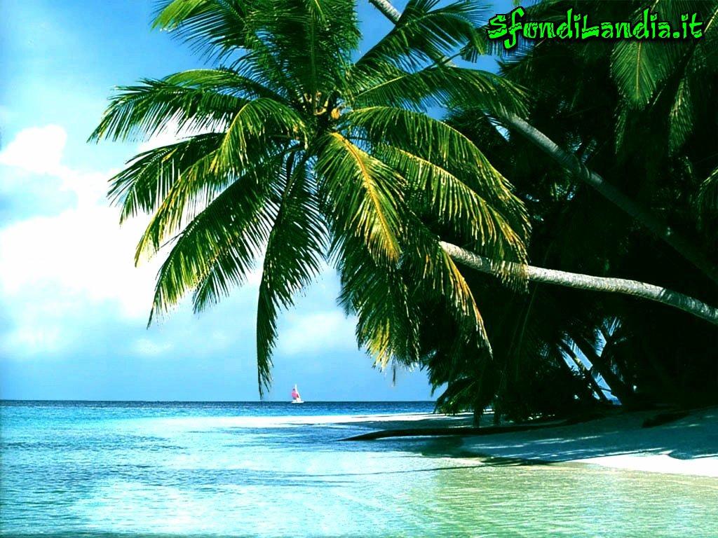 sfondo gratis di palme sul mare per desktop smartphone