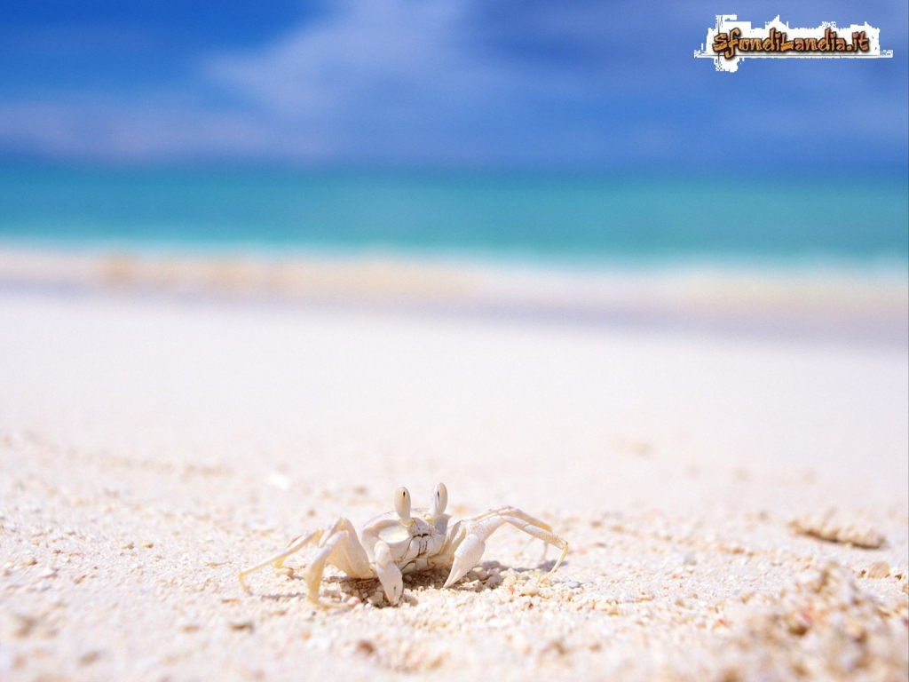 Krab On Beach