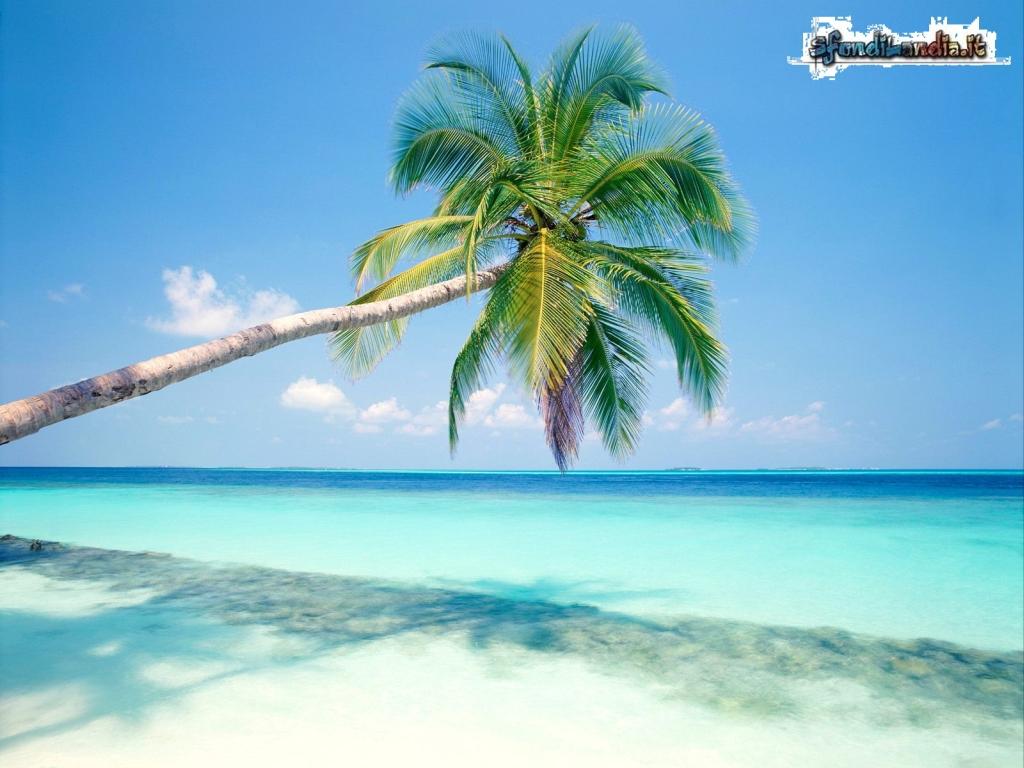Sfondo gratis di palma tropicale per for Sfondilandia mare