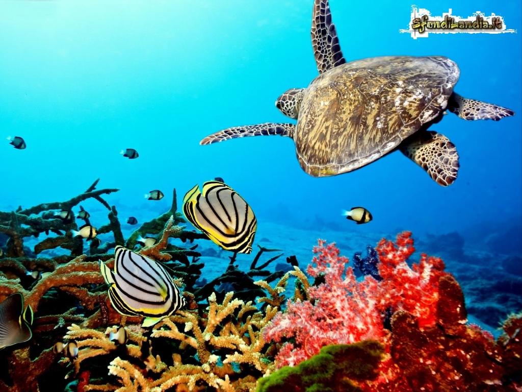 Sfondo gratis di pesci e coralli per for Sfondi animati pesci