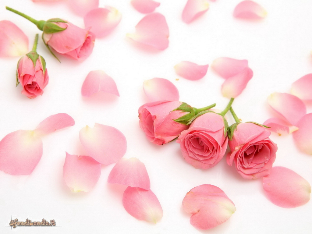 Sfondilandiait Sfondo Gratis Di Petali Di Rosa Per Desktop