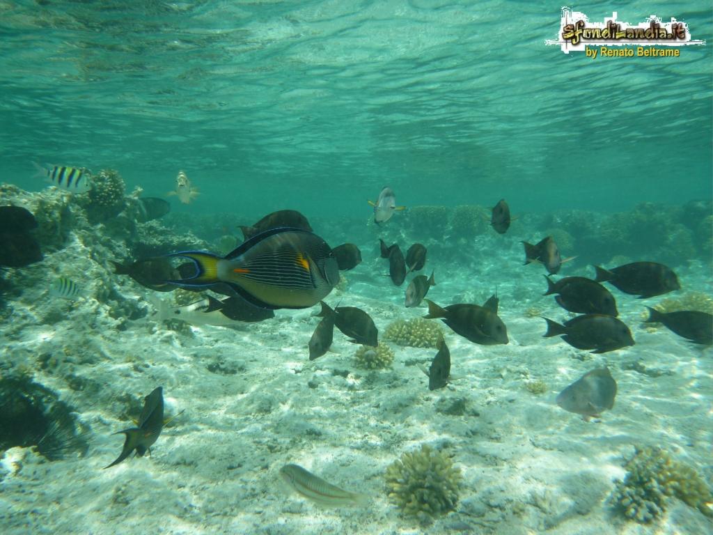 Sfondo gratis di pesci tropicali per for Sfondi pesci tropicali