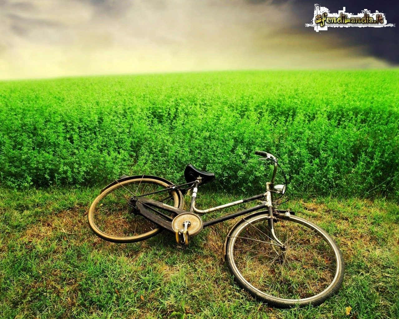 Bike And Field