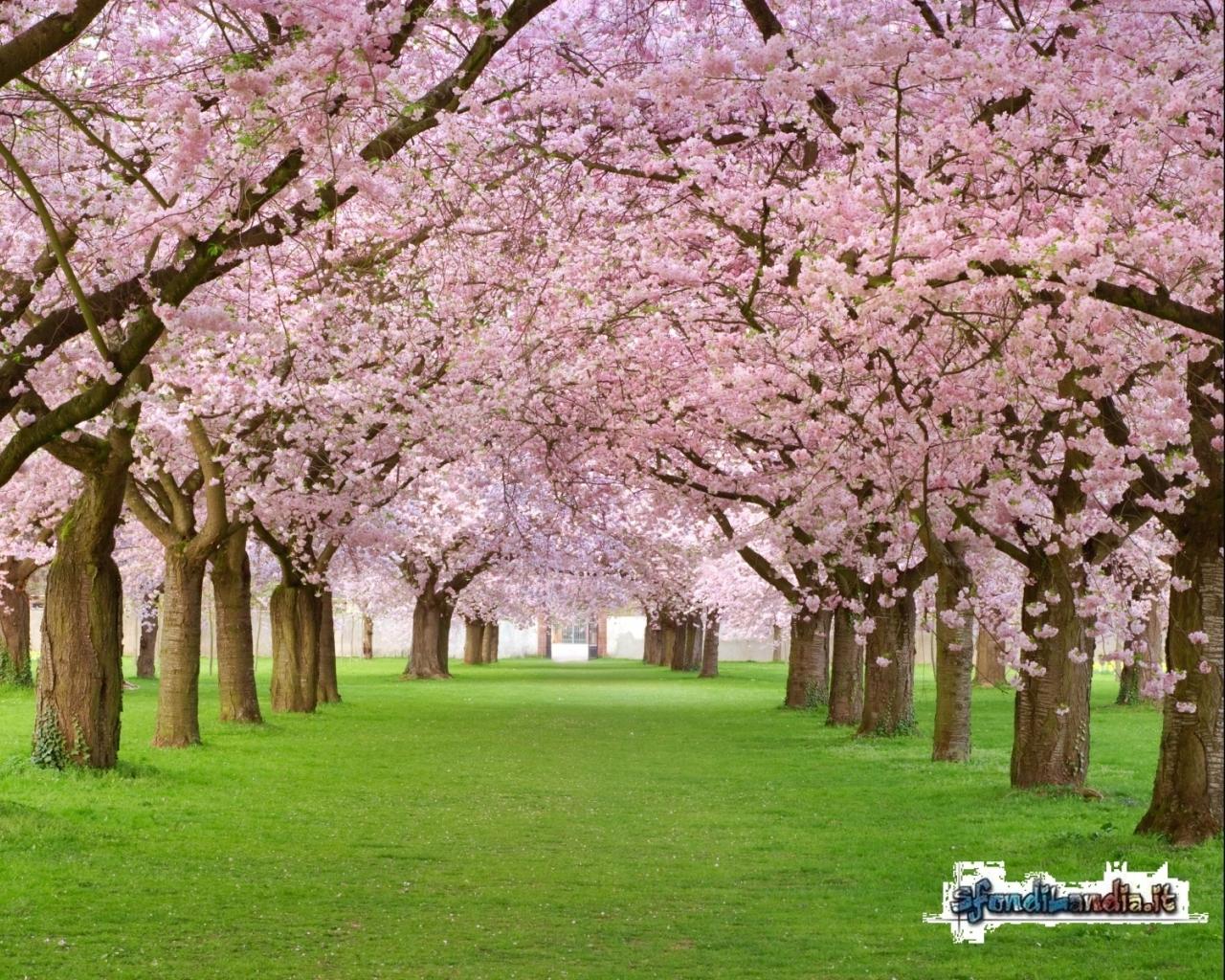 Blossoms Petals
