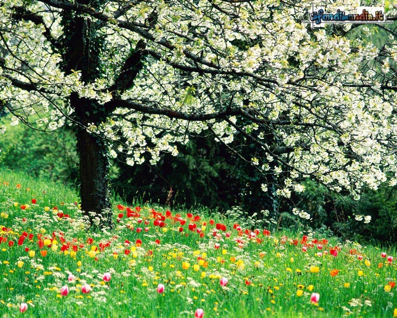 Boccioli in fiore