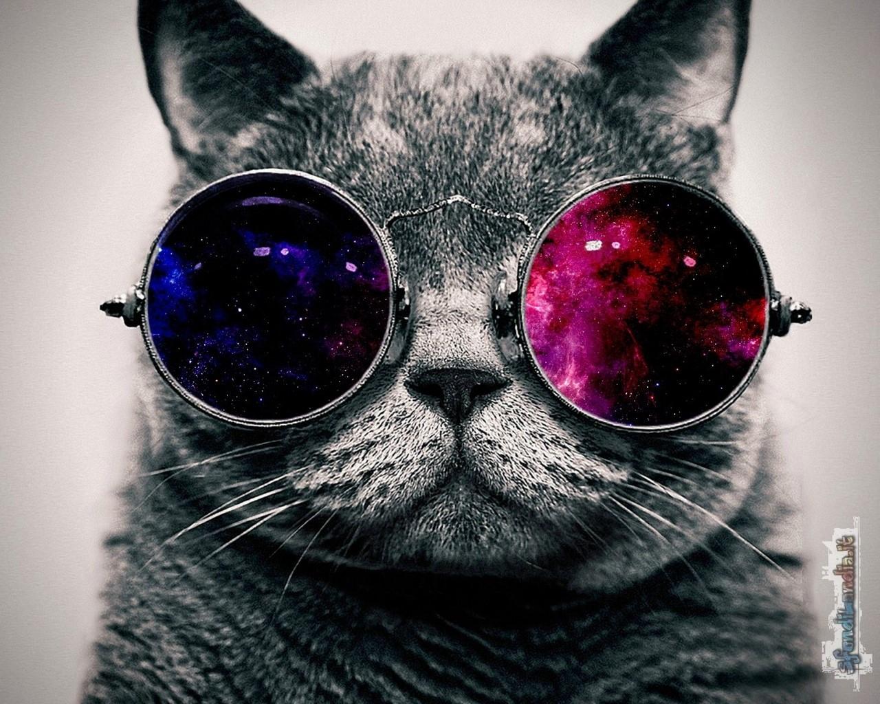 Cat Cool