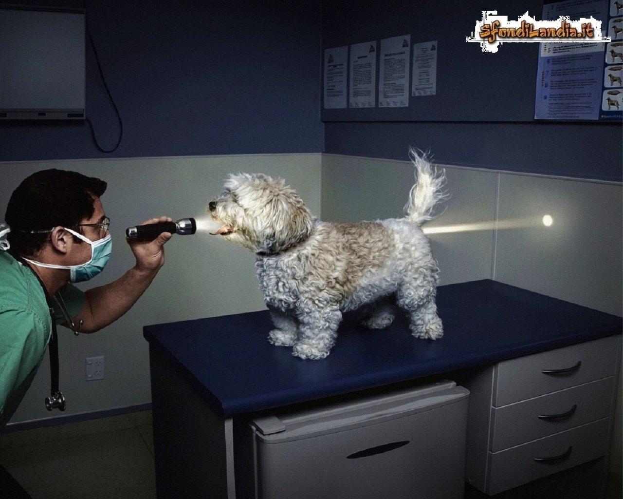 Dog Visit