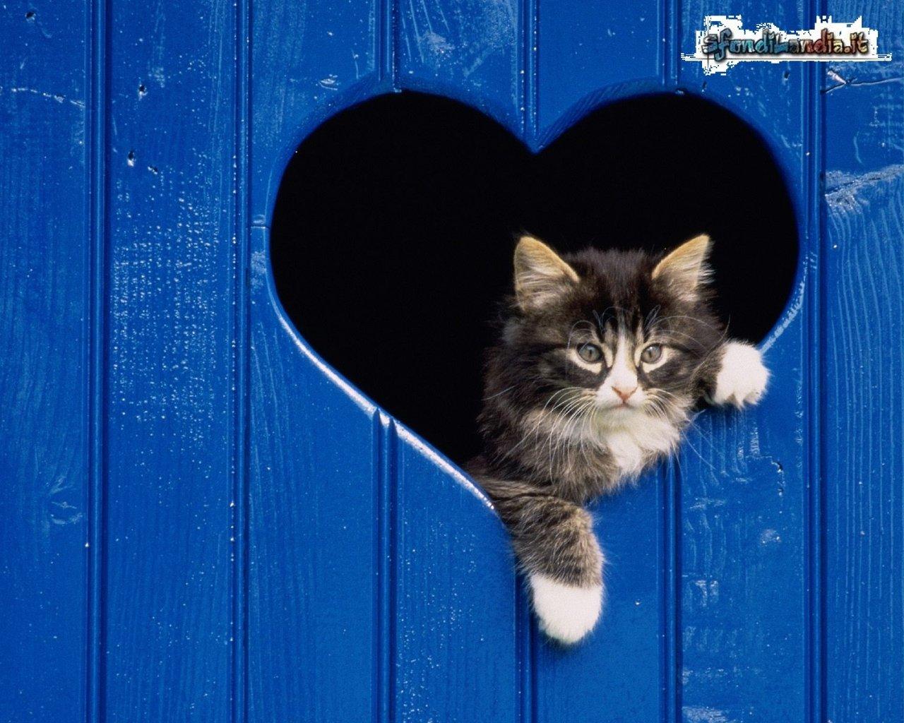 Gatto nel cuore