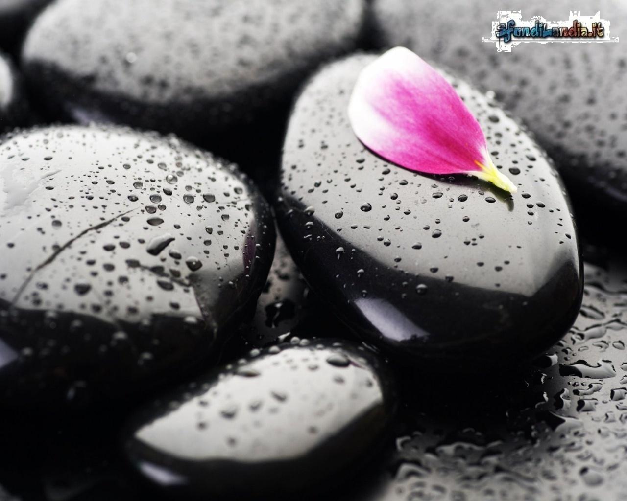 Petal On A Rock