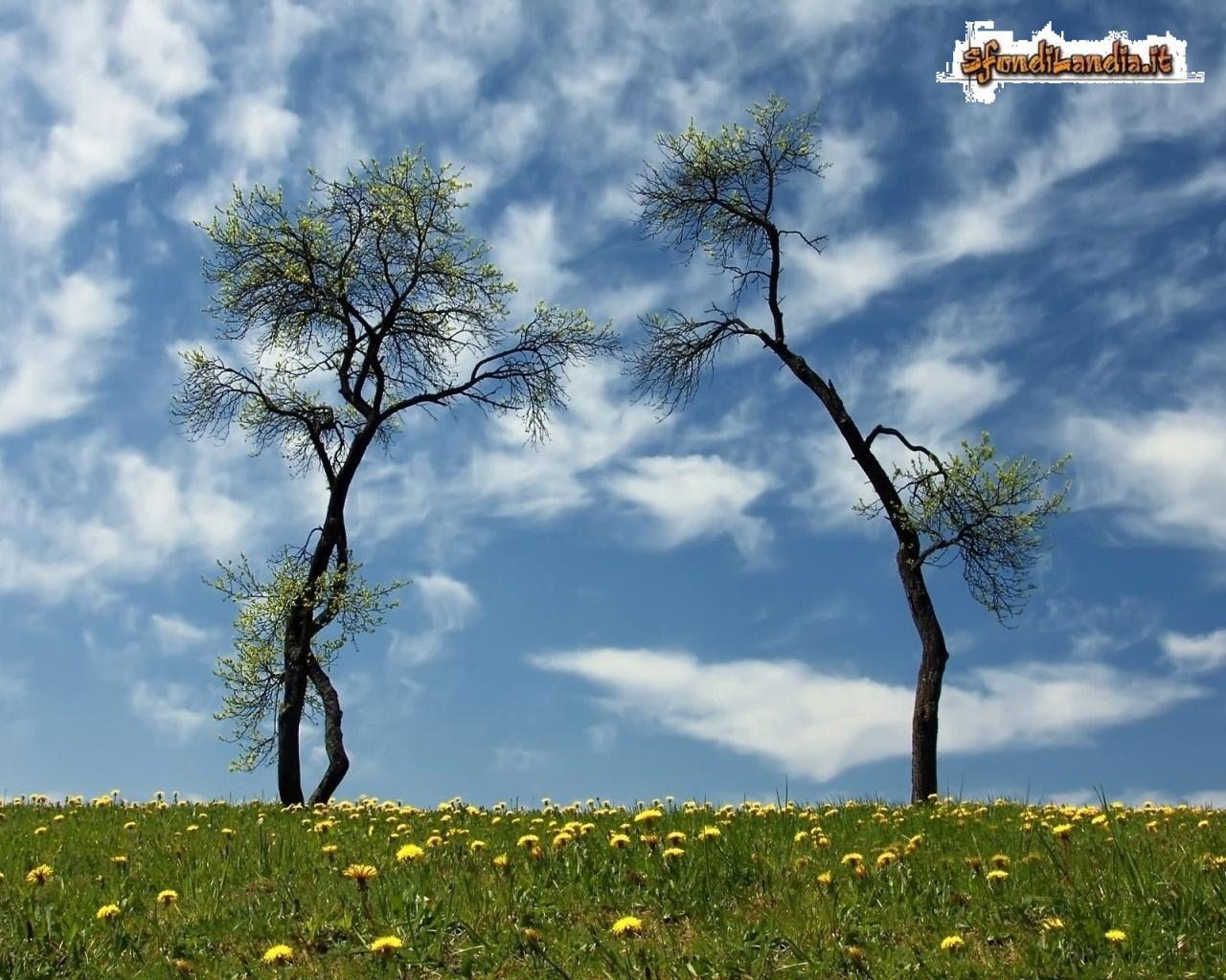Arco di alberi