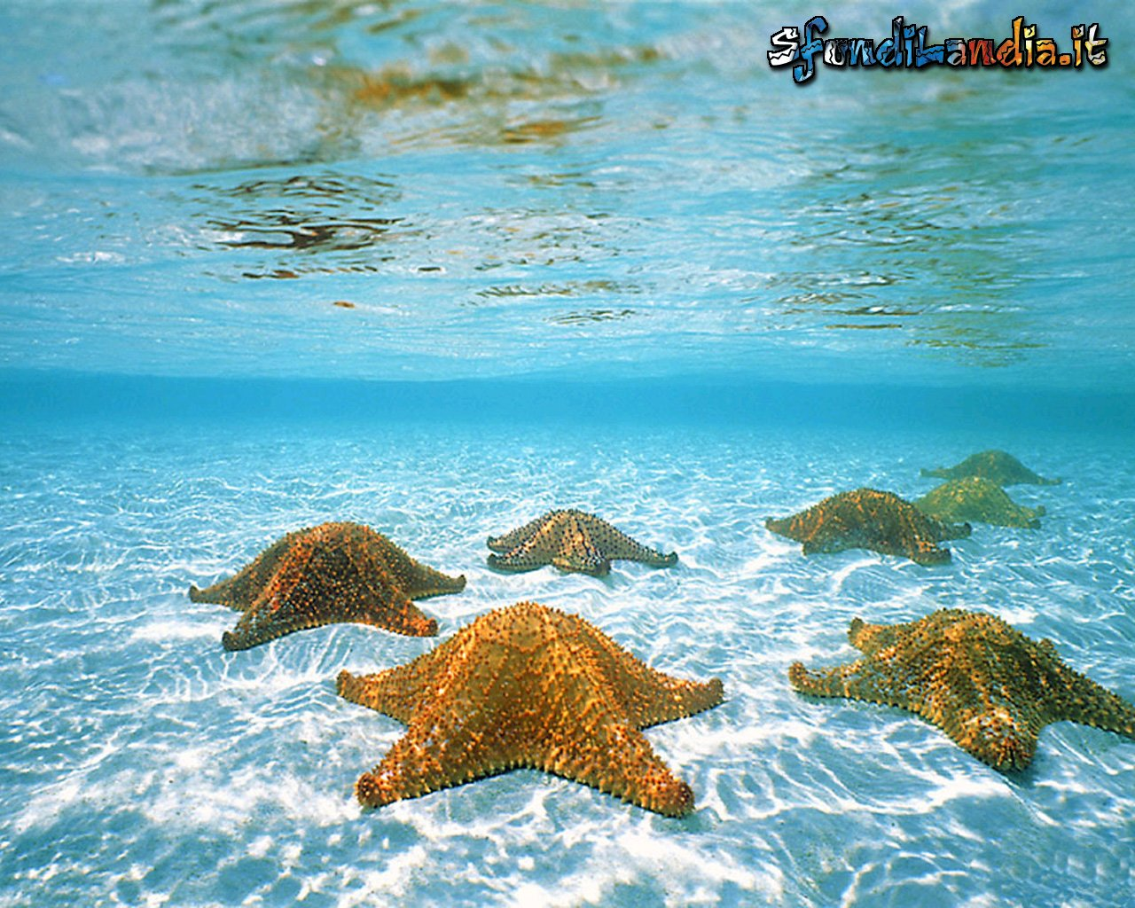 Sfondo gratis di undersea per desktop for Sfondilandia mare
