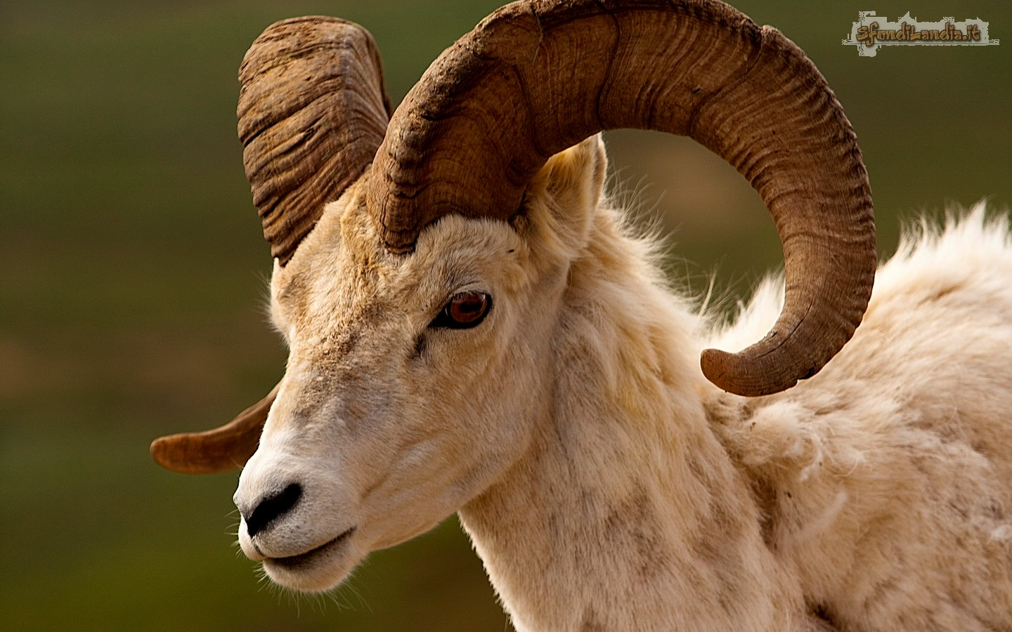 Aries And His Horns