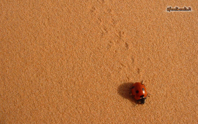Walk On Sand