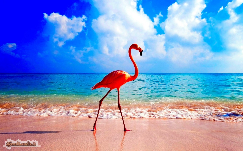 Sfondo gratis di fenicottero al mare per for Foto mare per desktop