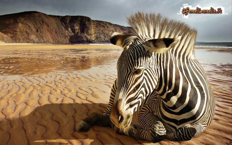 Sfondilandia sfondo gratis di zebra per desktop