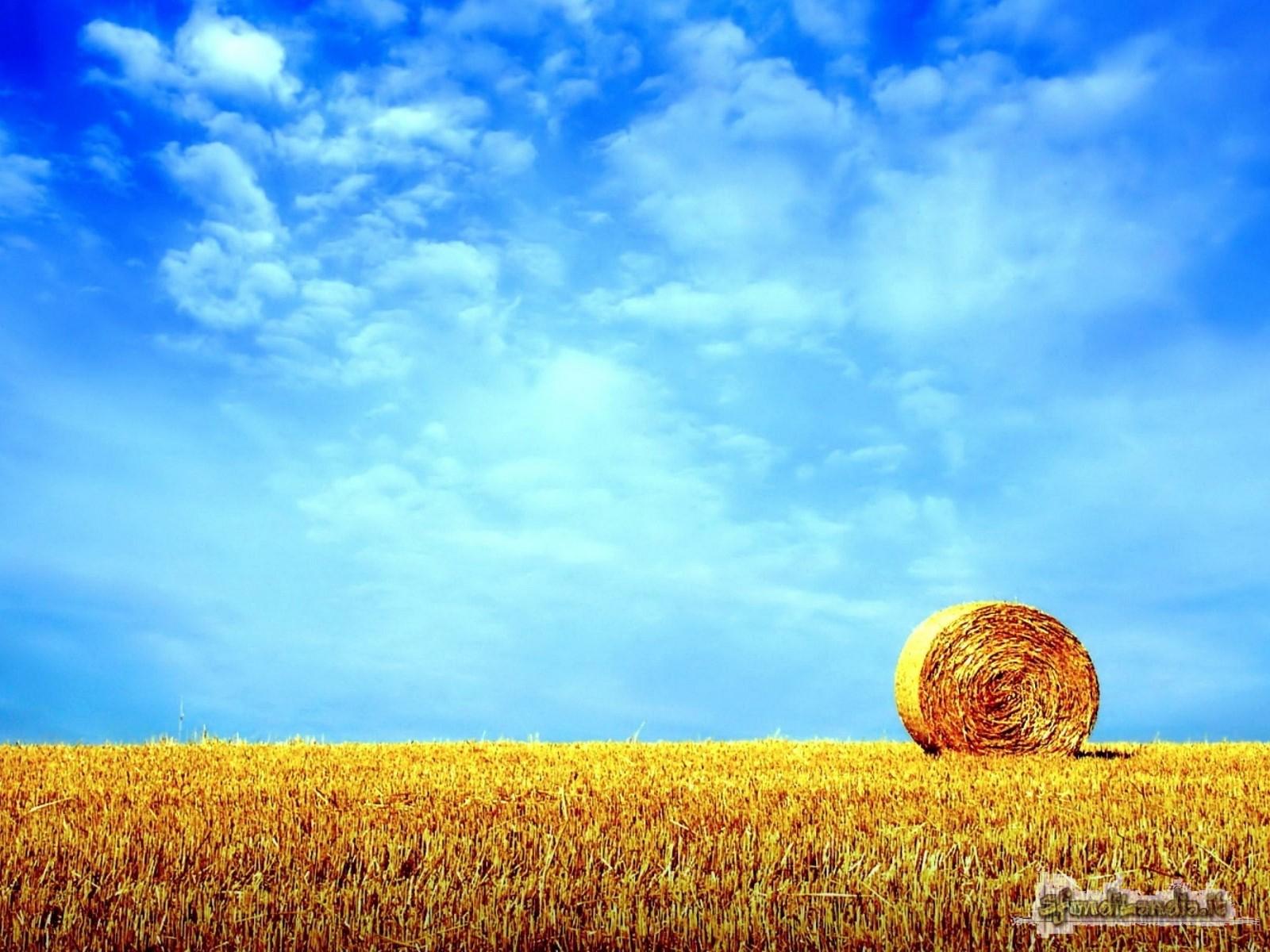 Il grano e il cielo