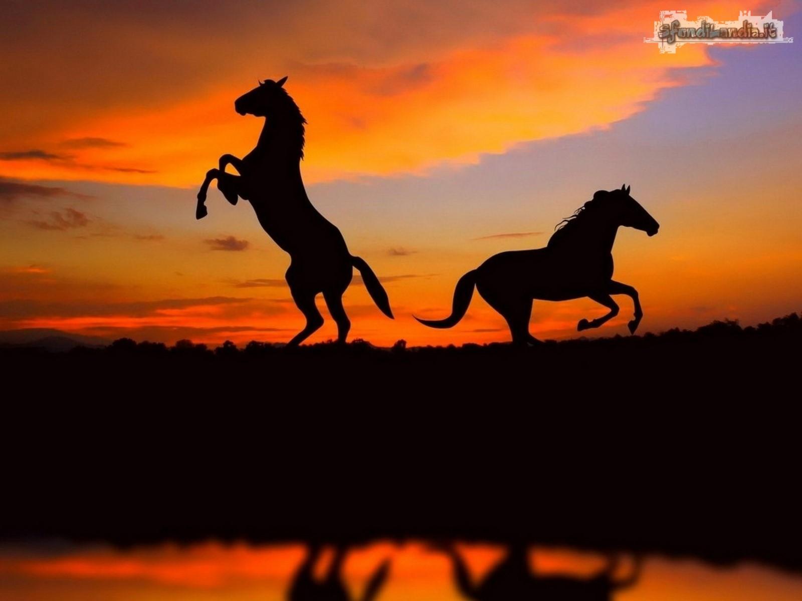 Sfondo gratis di cavalli al tramonto per for Sfondilandia mare