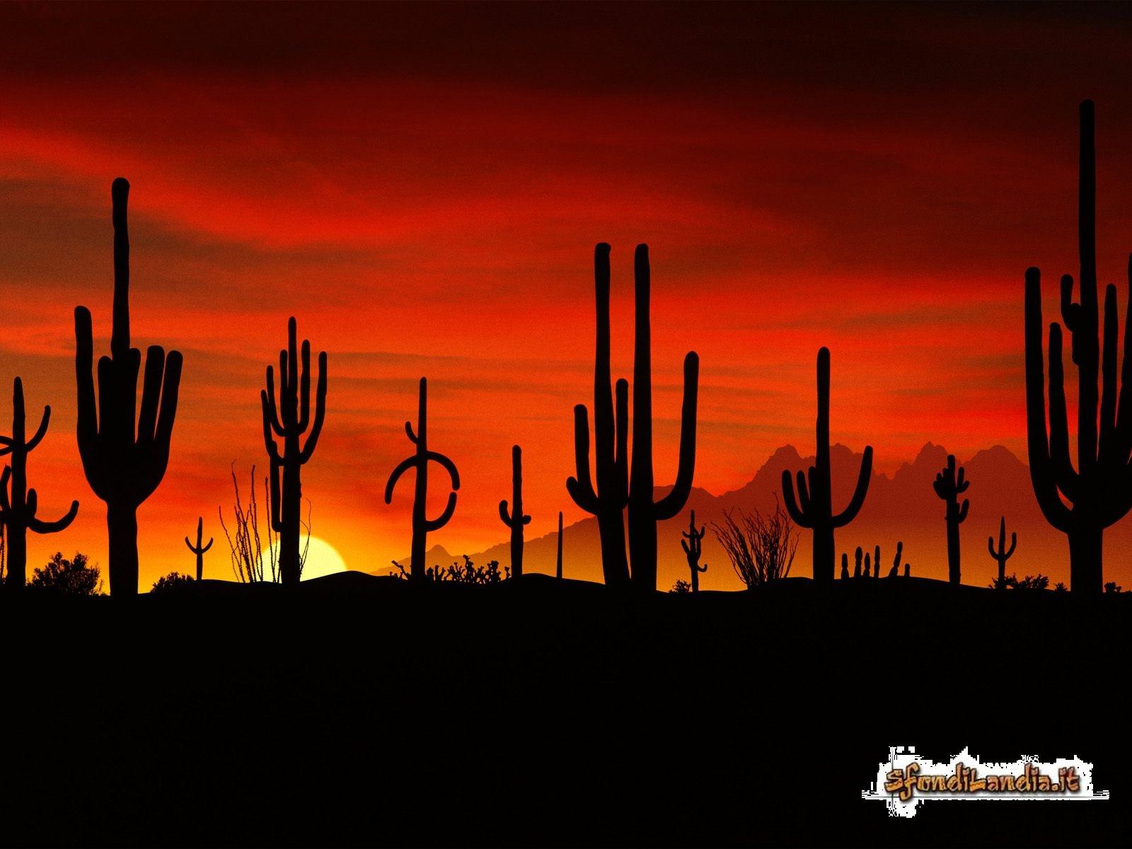 Deserto della Sonora