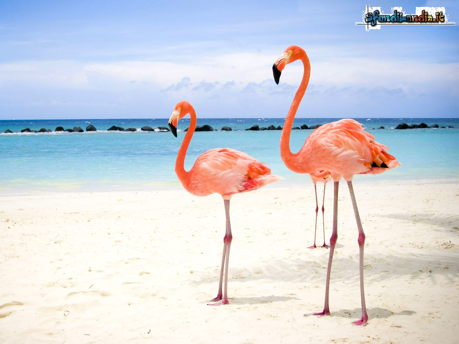 Sfondo gratis di fenicotteri al mare per for Foto per desktop mare