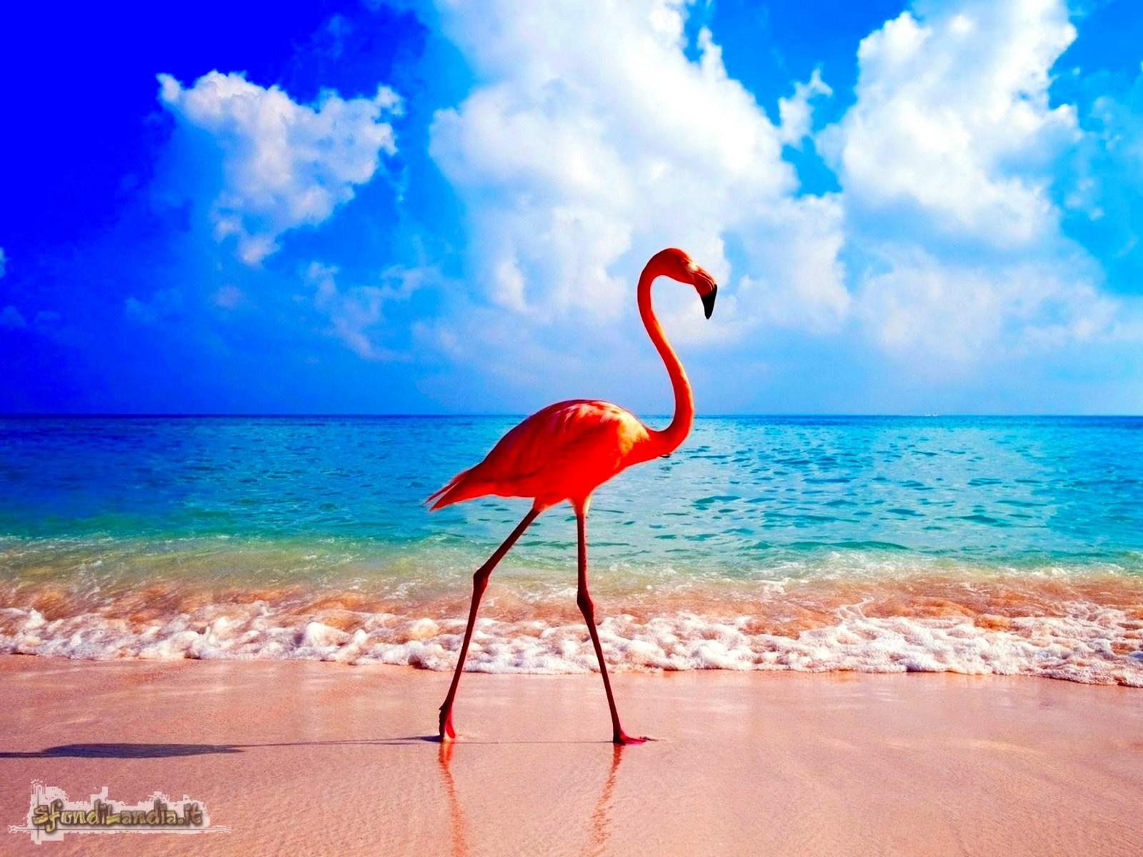 Sfondo gratis di fenicottero al mare per for Sfondilandia mare
