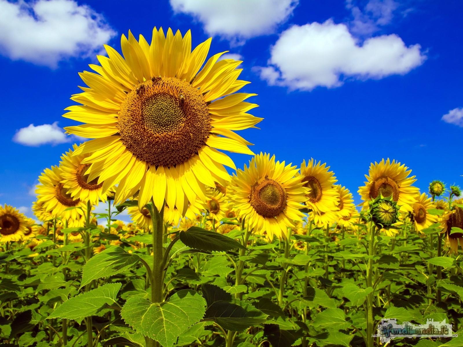 Sotto il sole