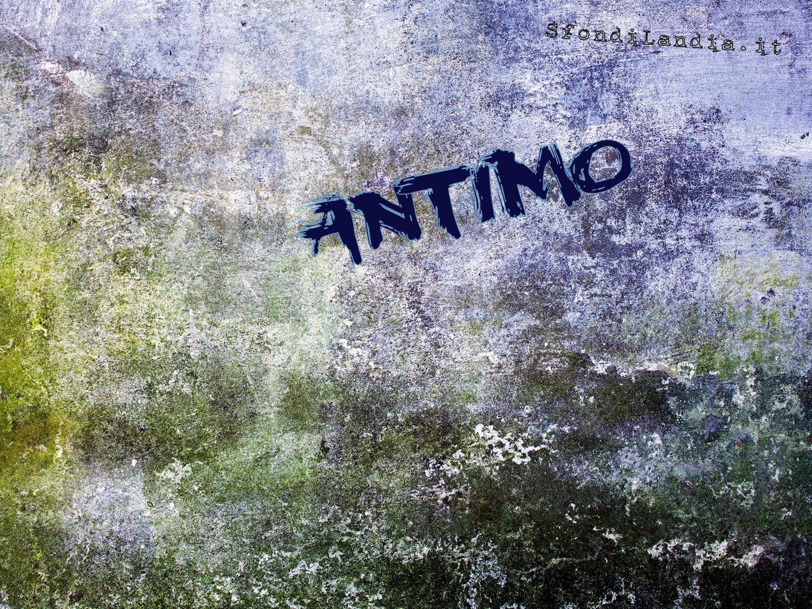 Antimo