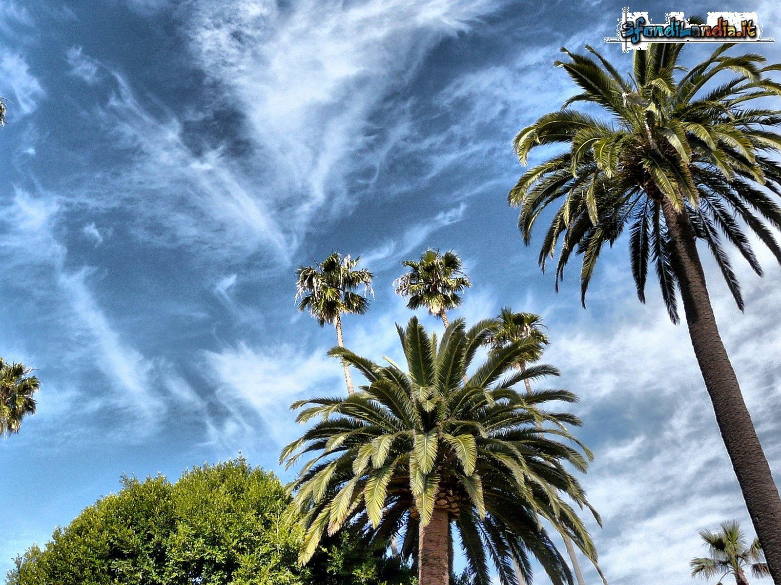 Palme sotto il cielo