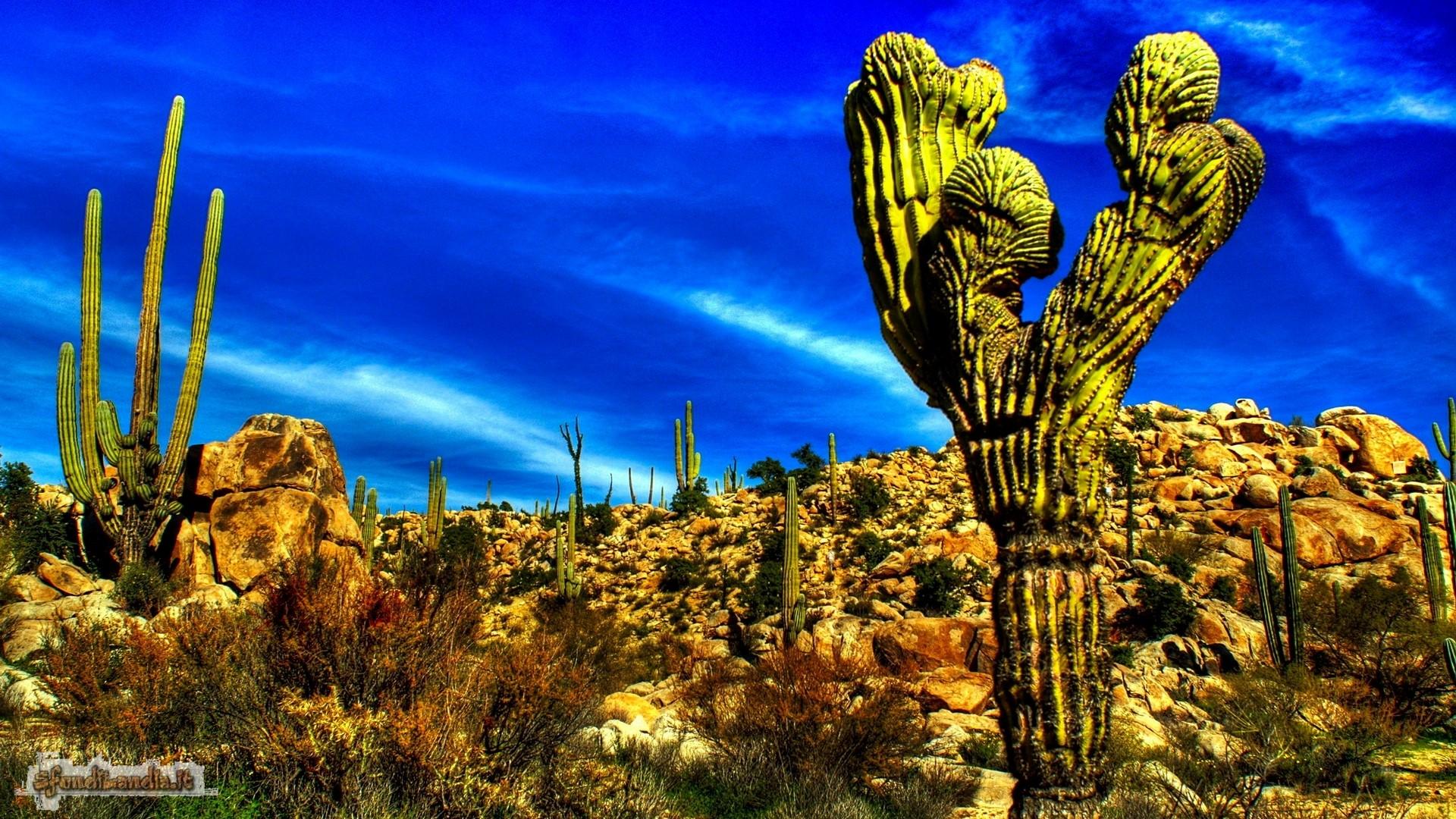 Azalai Baja Cactus