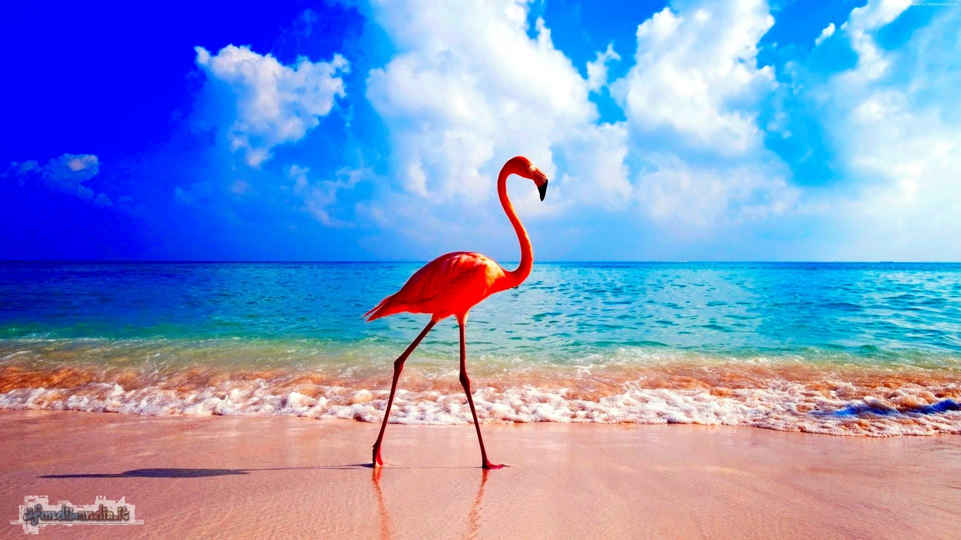 Sfondo gratis di fenicottero al mare per for Foto per desktop gratis mare