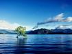 Sfondo: Albero nel lago