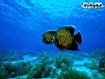 Sfondo: Angelfish