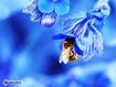 Sfondo: Ape sul fiore