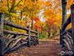 Autumn Colourful