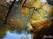 Sfondo: Autumn River